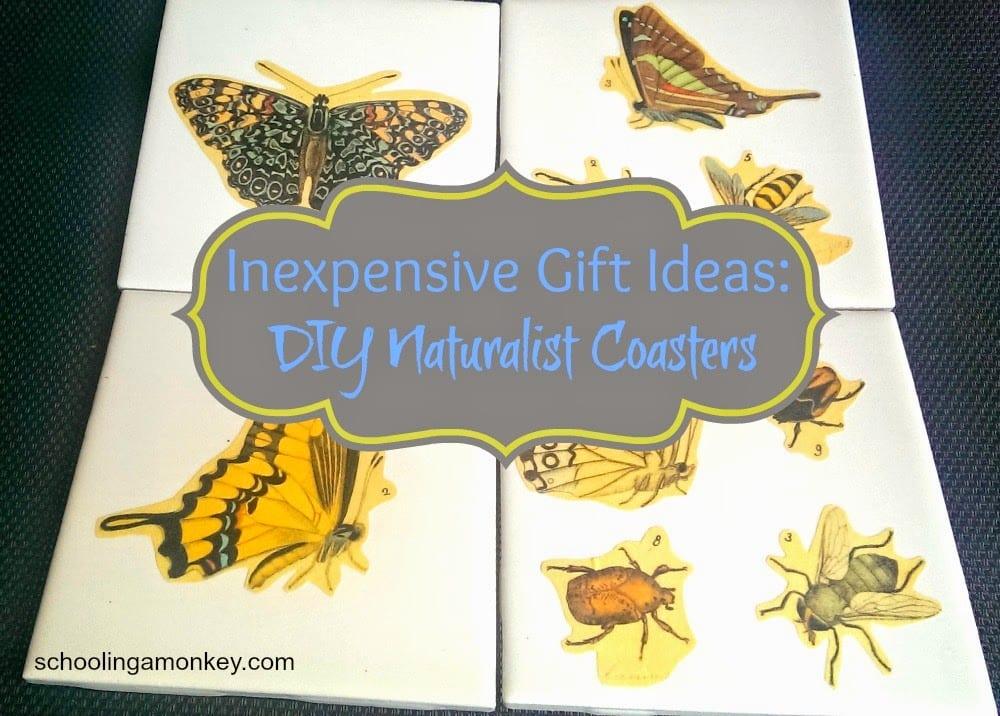 diy-naturalist-coasters