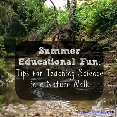 Summer Educational Fun: Tips for Teaching Science in a Nature Walk