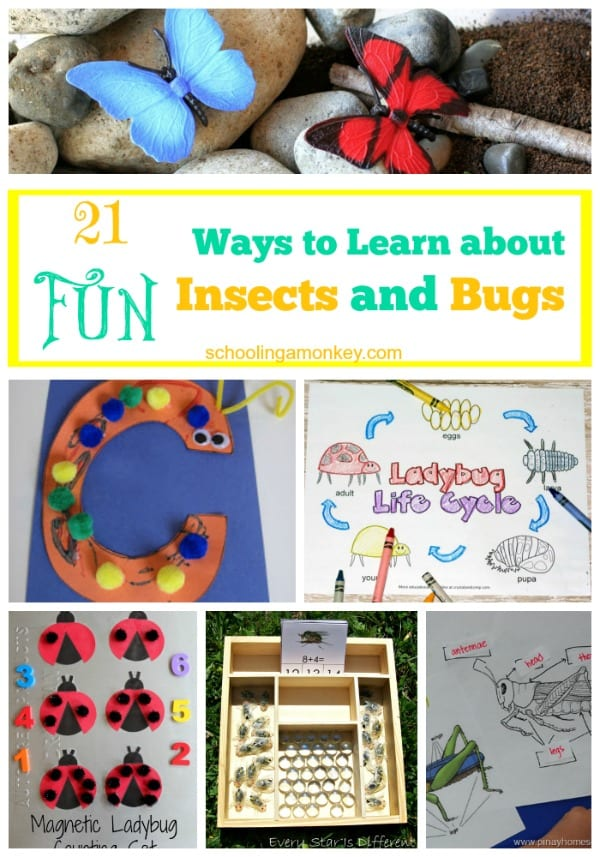 21 Fun Ways to Learn about Insects and Bugs