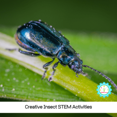 Creative Insect STEM Activities for Kids