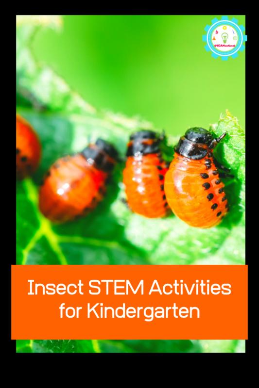 insect stem activities for kindergarten