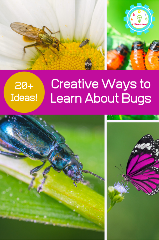 Learning about bugs? These insect STEM activities for kids teach kids the basics about bug anatomy, insect life cycles, and more all using STEM insect activities to boost science learning and education!