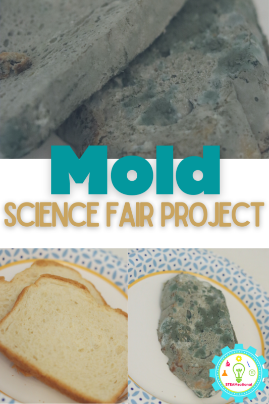 Follow along with these instructions to make your own version of the bread mould experiment!