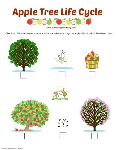 Apple Activities for Kids: Apple Life Cycle Printable