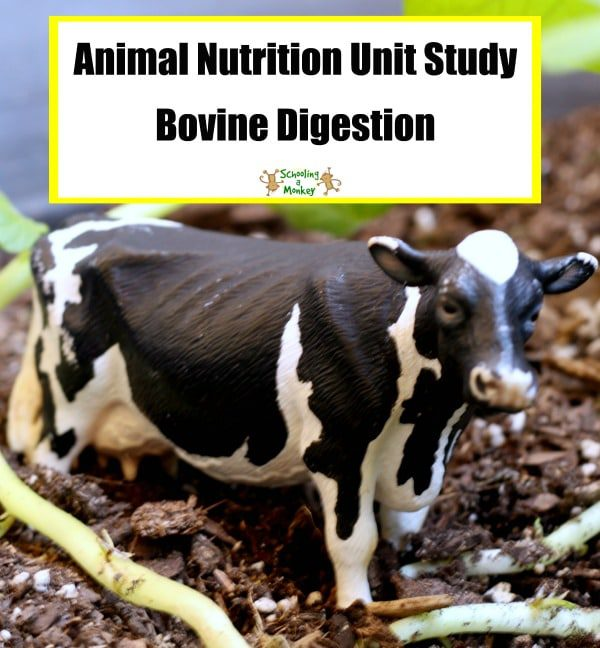 Love cows? Then you will love this free unit study all about a cow's digestive system and animal nutrition!
