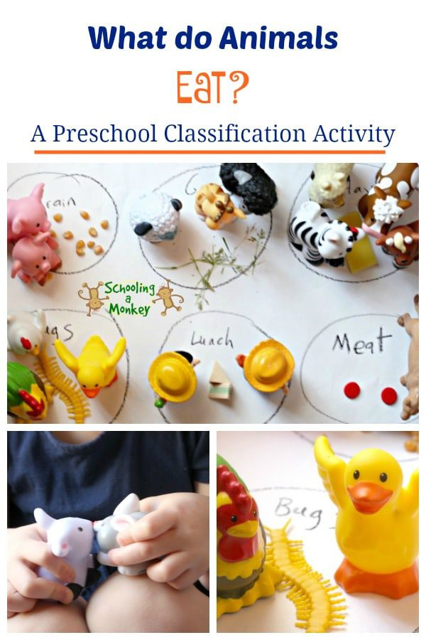 In this no-prep totschooling activity, teach preschoolers the varying dietary needs of animals through classification using small toys.