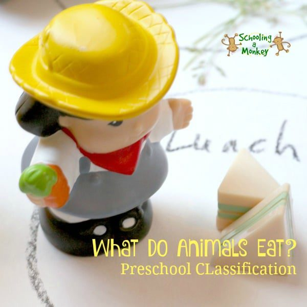 Toddler STEM: Animal Diet Classification