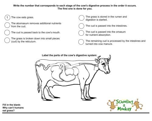 Love cows? Then you will love this free unit study and printable worksheet all about a cow's digestive system and animal nutrition!
