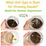 Seed Sprouting Science Experiment