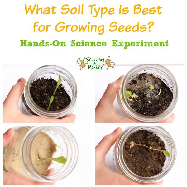 Seed sprouting science experiment for Different types of soil for kids