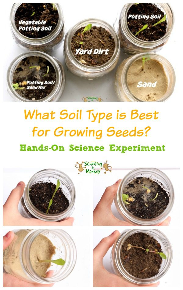 Seed sprouting science experiment for Types of soil for kids