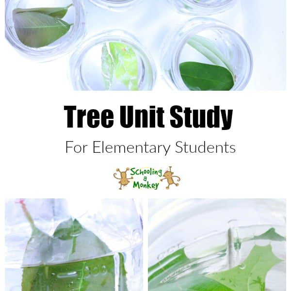 How Do Trees Make Oxygen Science Experiment