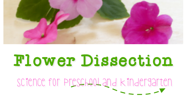 Flower dissection science for kindergarten ccuart Image collections