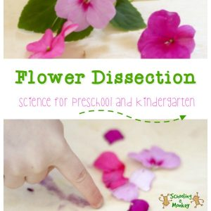 Flower Dissection: Science for Kindergarten