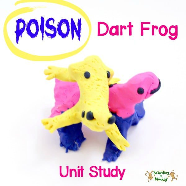 Learn about poison dart frogs in the poison dart frog unit study.
