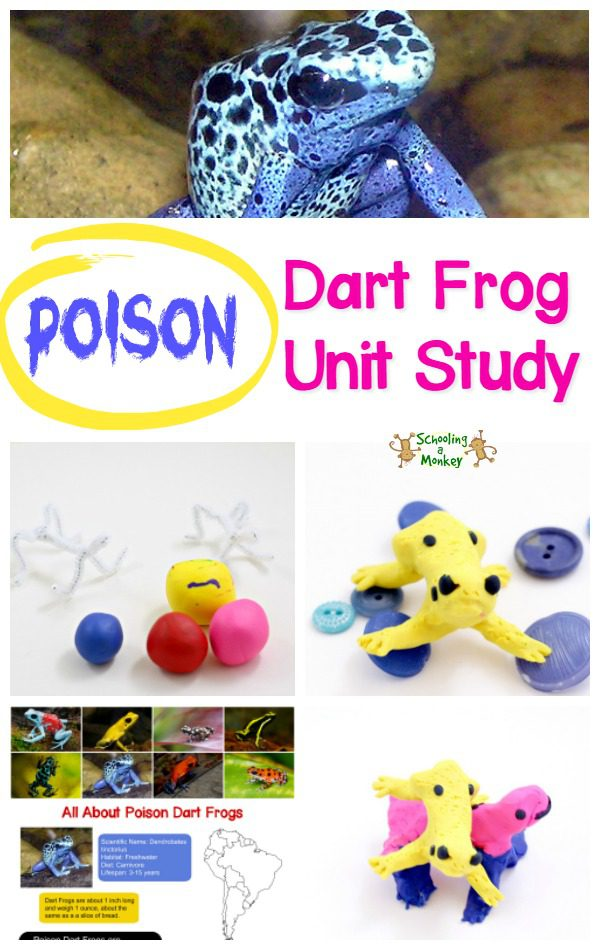 The poison dart frog is one of nature's deadliest creatures. Learn all about poison dart frogs with this poison dart frog unit study and poison frog craft!