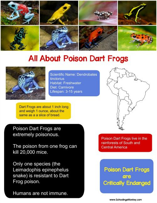 This poison dart frog fact sheet is the perfect way to launch an independent study or thematic unit on poisonous frogs. NO-PREP required!