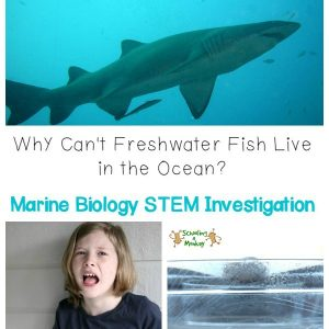 In this water science for kids activity, we investigated how saltwater fish survive in the ocean and made our own water distiller and desalinized saltwater.