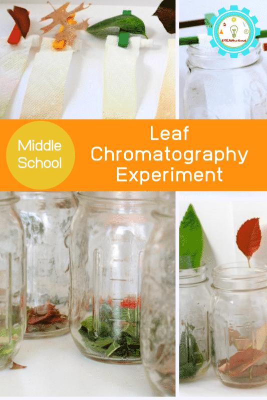 Leaf Chromatography Experiment