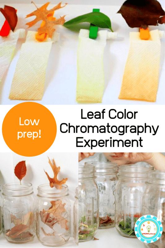Leaf Color Chromatography Experiment