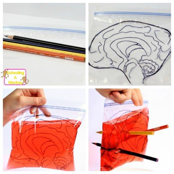 "Halloween science activities are a fun way to introduce science. This ""brain surgery"" experiment is a twist on the leak proof bag science experiment."