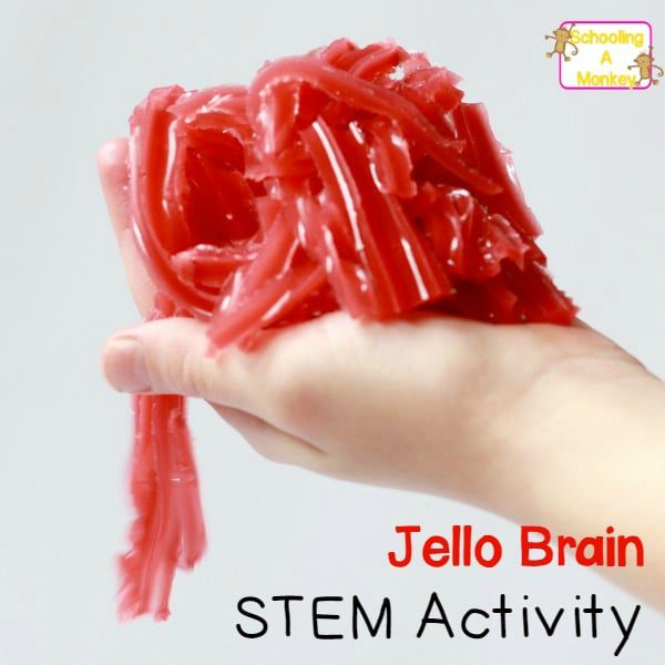 Gross out your kids, friends, and neighbors with this deliciously frightening jello brain recipe! No mold needed to make this jello brain STEM activity!