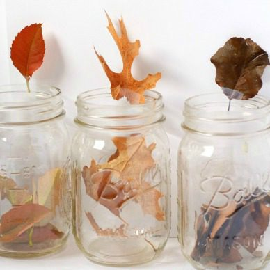 This leaf chromatography STEM activity will teach kids about what colors are in leaves.