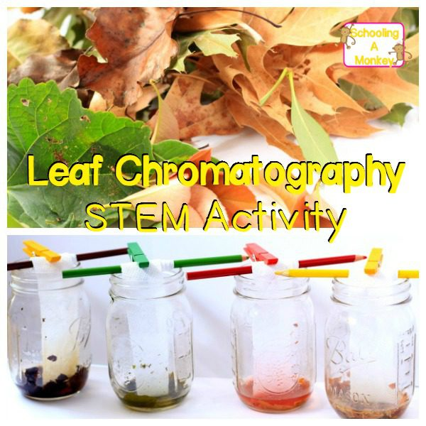 This leaf chromatography STEM activity shows just how many hidden colors there are in fall leaves! Your kids will have a blast with this one!