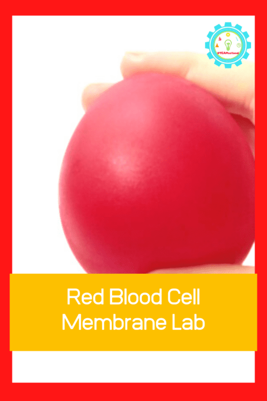 red blood cell membrane lab