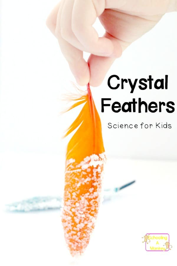 If you're looking for simple science projects, the salt crystal feathers are so much fun! These homemade salt crystals are the perfect salt crystal project and you can learn how to make salt crystals fast for any salt crystals science project. #scienceprojects #science #scienceexperiments #stemactivities