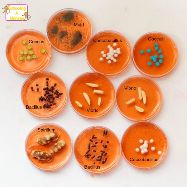 Edible Pitri Dish Bacteria: Bacteria You Won't Regret Eating!