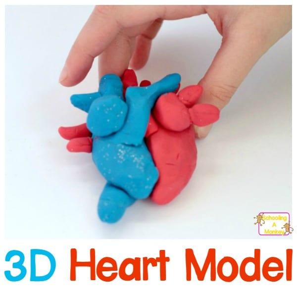 3D DIY Heart Model for Kids!