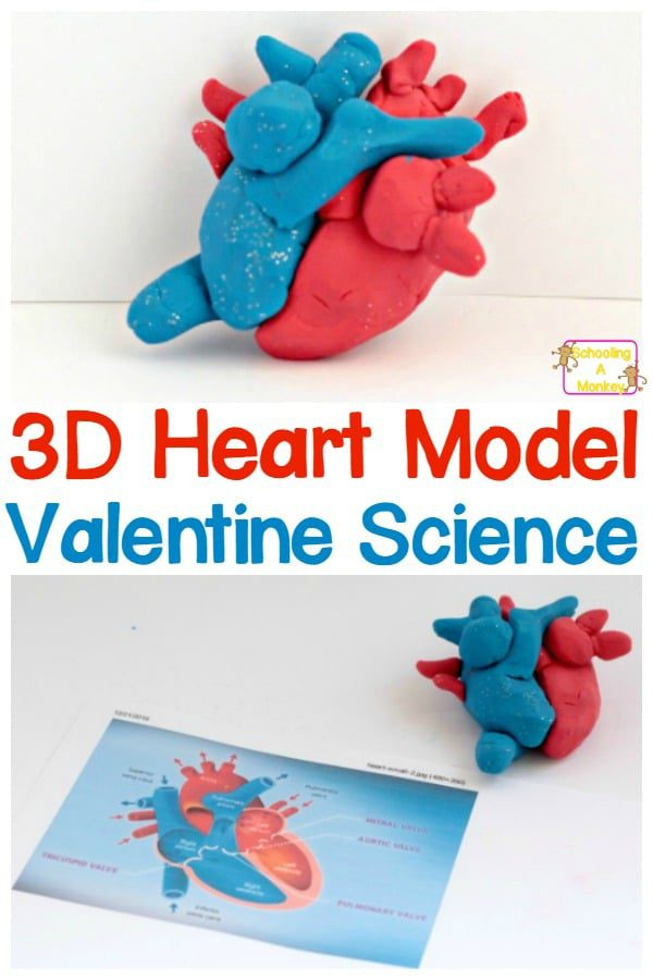 Celebrate the scientific side of Valentine's Day with this 3D DIY heart model that kids can build from modeling clay! You'll never look at hearts the same way again!
