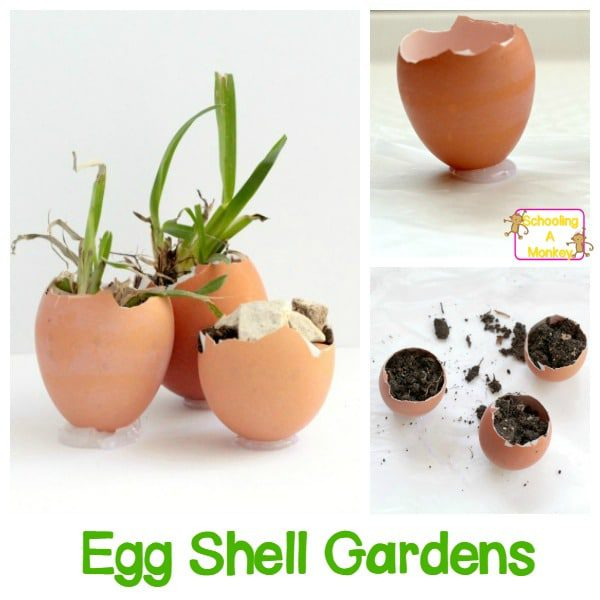 Egg Shell Garden Science Project