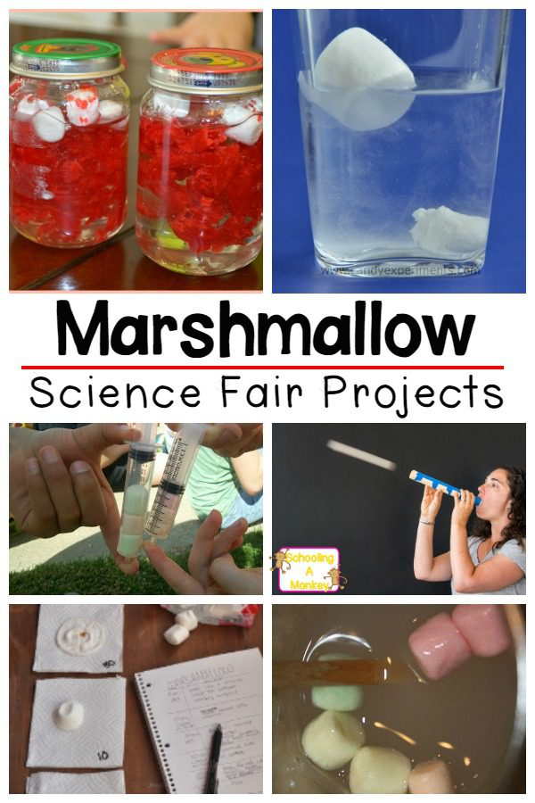 If you love marshmallows, you'll love this list of marshmallow science fair projects that kids can enter into their school science fair!