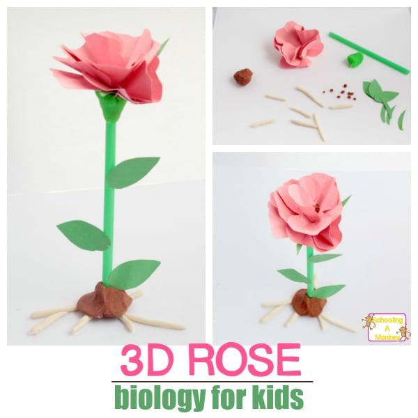 Wildflower Unit Study for Elementary: 3D Parts of a Flower Model