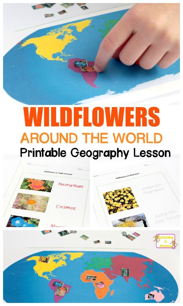 Learn about wildflowers and where they come from with the flowers around the world worksheet pack! This geography lesson is part of a wildflower unit study.