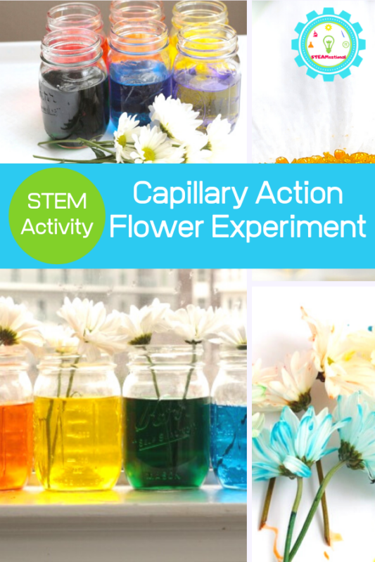 capillary action flower experiment