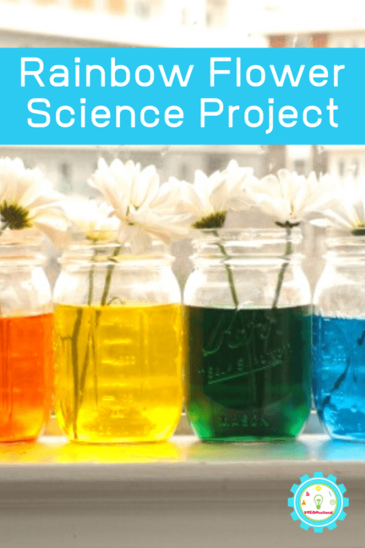 rainbow flower science project