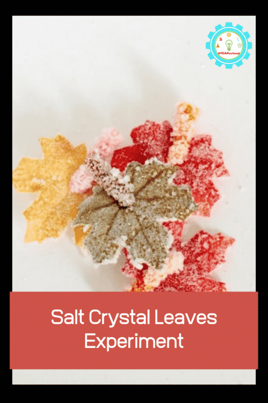 salt crystal leaves experiment