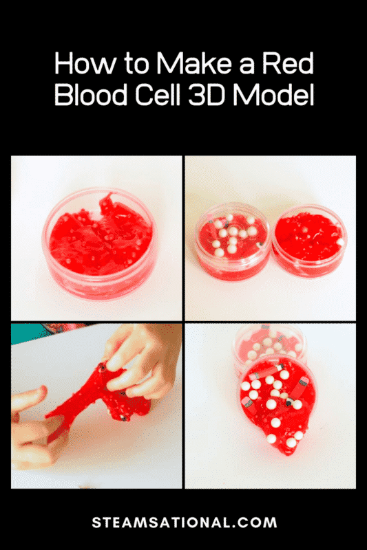 How to Make a Red Blood Cell 3D Model
