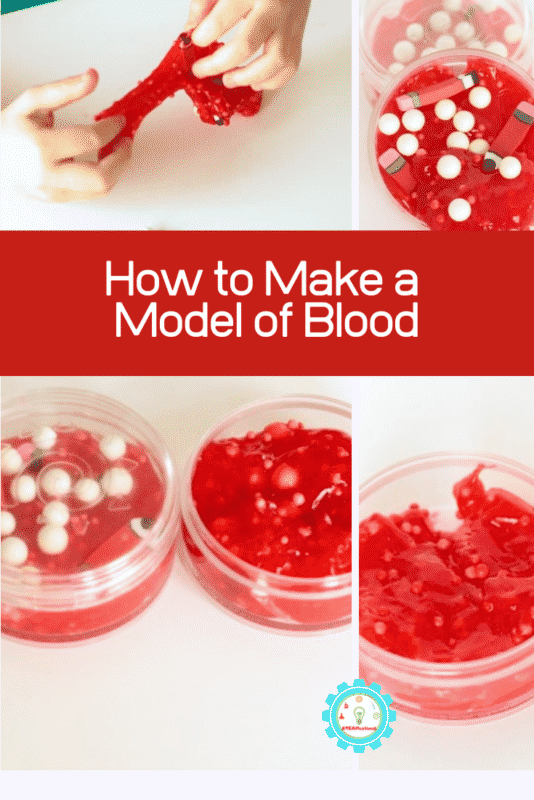 how to make a model of blood