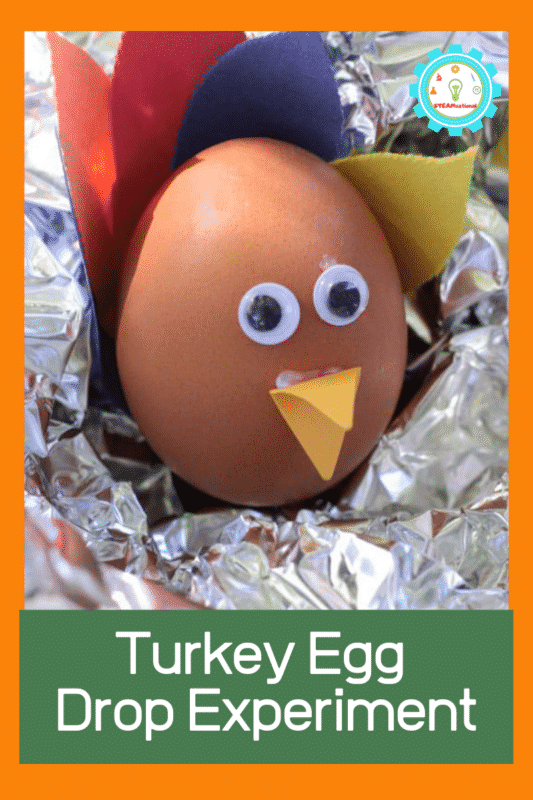 turkey egg drop experiment