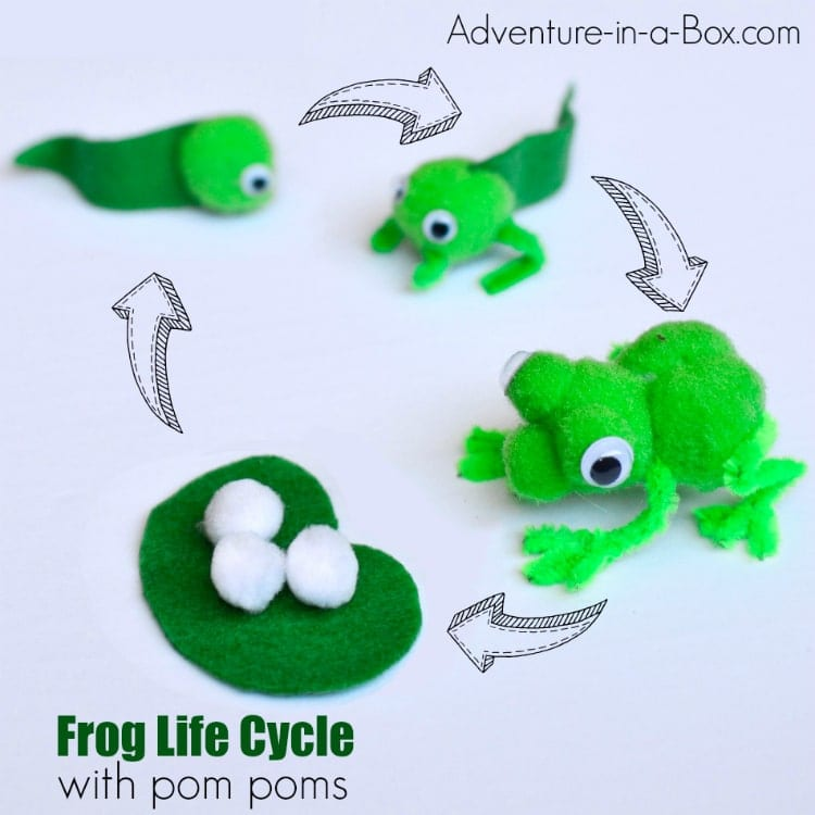 Frog Life Cycle Craft For Preschool