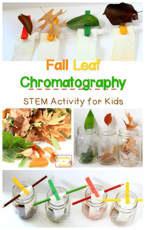 fall science for kids- fall leaf chromatography experiment