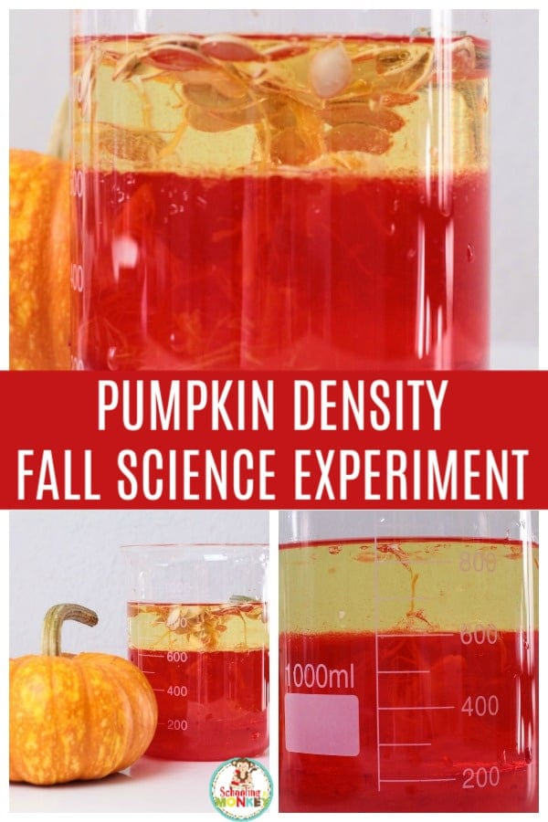 Take your density experiments to the next level with the parts of a pumpkin density tower! Building a density column has never been this fun! #stemactivities #stemed #stem #handsonlearning #fallactivities #scienceexperiments