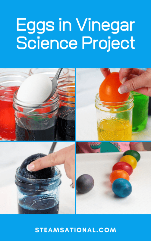 rubber egg science experiment