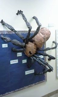 A 3d spider on a classroom bulletin board with labeled parts