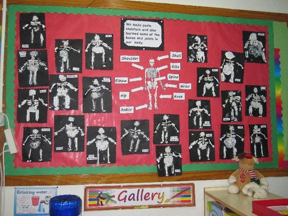 A science bulletin board that is decoarted with skeletons and labeled parts for classroom halloween decorations
