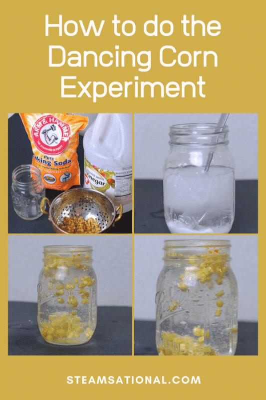 dancing corn experiment